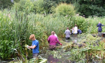 Himalayan balsam being removed from a stream, a conservation activity now paused due to the UK lockdown.