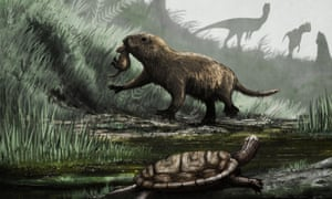 An artist's impression of Mesozoic animals found fossilised in the Kayenta rock formation. It shows Dilophosaurus (dinosaur) at the back, Kayentatherium (Mesozoic mammal) in the centre, and Kayentachelys (Mesozoic turtle) at the front.