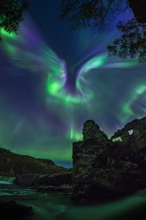 aurora, shaped like a bird
