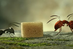 Wonderful … Minuscule: Valley of the Lost Ants