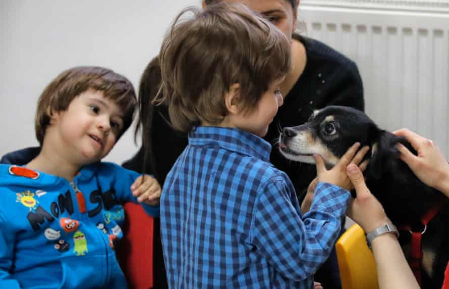 A child pets a utility dog in Bucharest, Romania