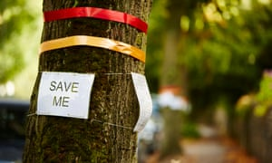 Protesters' signs on a lime tree in Rustling Road, Sheffield
