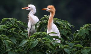 White Egrets are seen at the Qidashan Forest Park In China