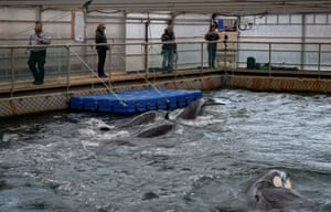 Orca are seen in one of the pens
