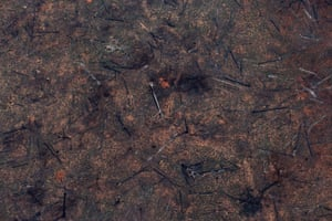 A burnt plot at Jamanxim national forest in the Amazon.