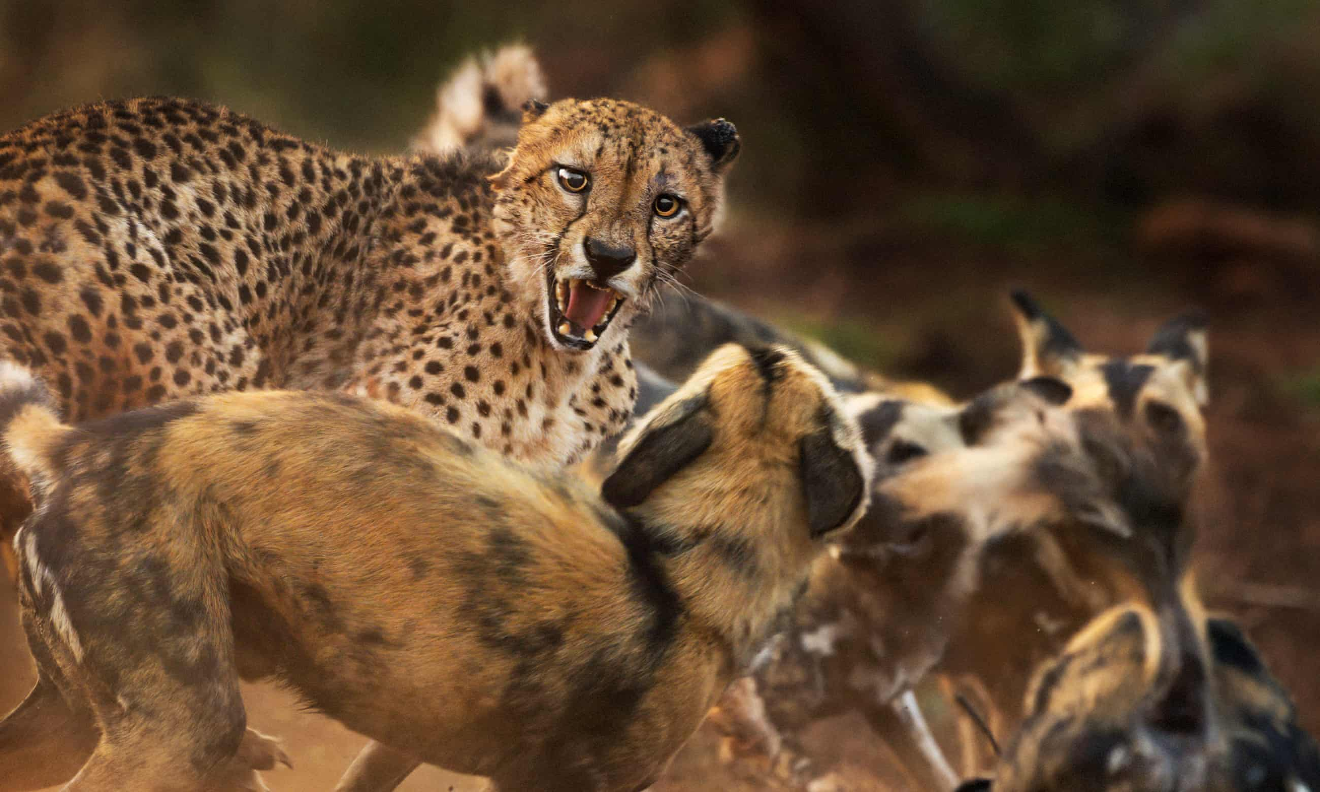 Wildlife photographer of the year – highly commended images