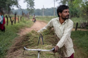 Manoj Kumar Yadav carries a rice crop on his bicycle to the village of Ghatbarra in the Hasdeo Aranad forest.