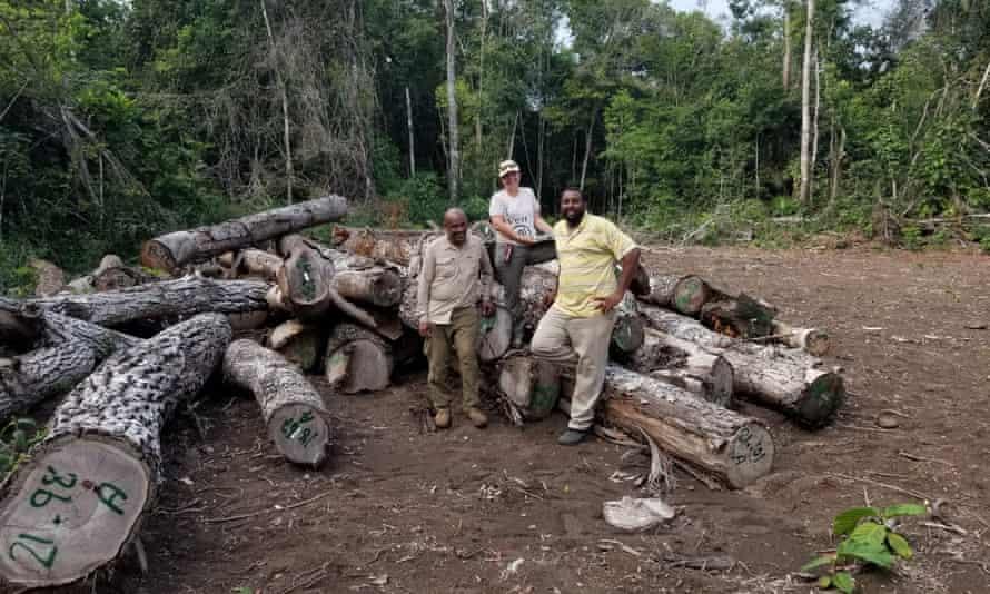 Maya forest deforestation in Belize