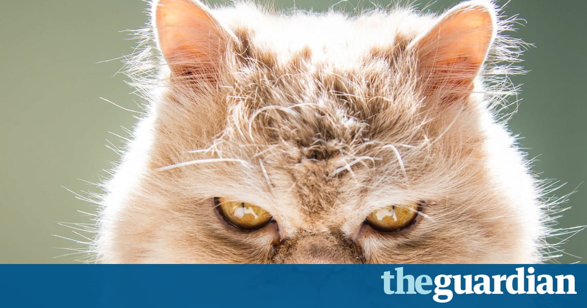 What Is Your Cat Thinking When It Looks At You In Pictures - 17 cats that are angry grumpy and fed up with everything