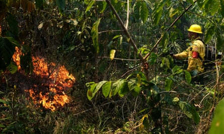 A volunteer fire brigade member attempts to control hot points in Mato Grosso state, Brazil, on 28 August.