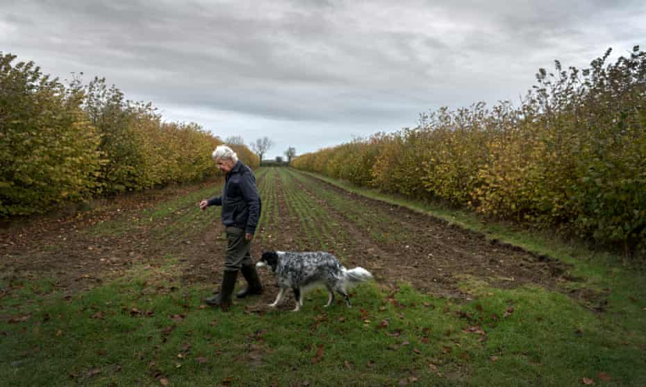 Plant pathologist Martin Wolfe has devoted his retirement to experimenting with agroforestry.