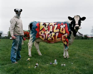 'Banksy' and cow