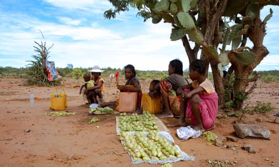 Prickly pears are one of the last foods available in this austere environment. These women walked for a day to collect fruit for their stall near a health centre.
