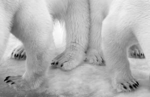Winner, Black and White category  Polar Pas de Deux by Eilo Elvinger, Luxembourg