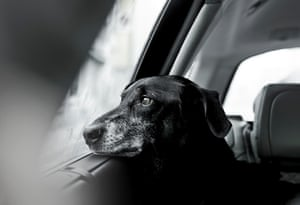 Second place, Oldies: rescue dog Nilo