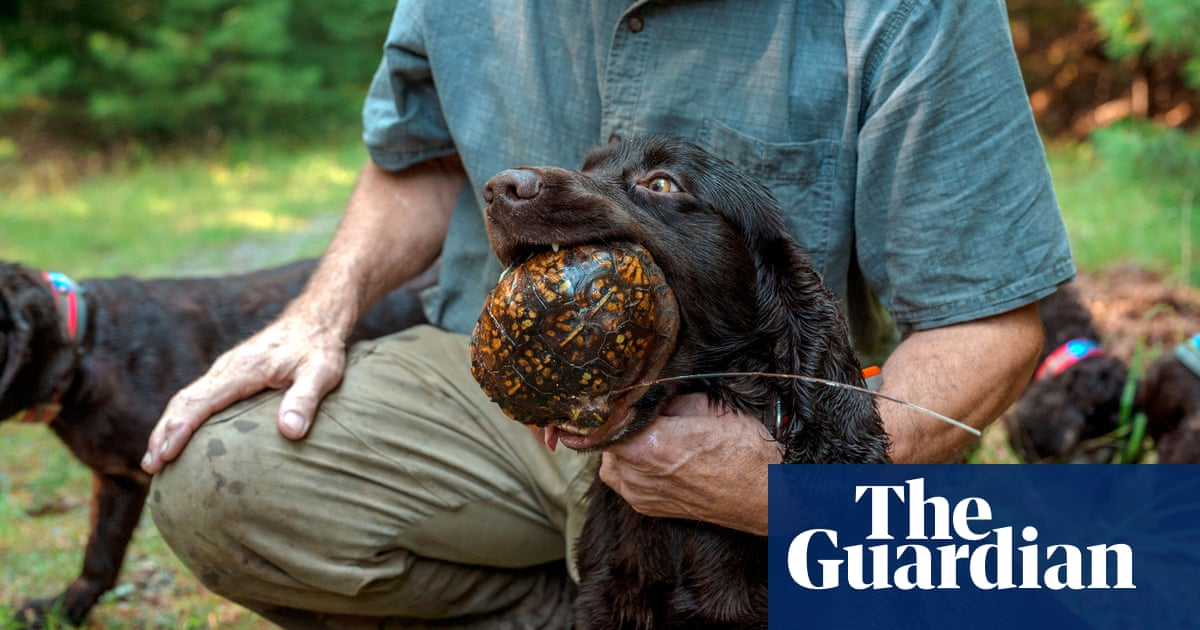 The six 'superdogs' who save turtles: 'It's all powered by love'
