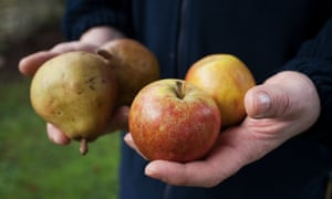 Unite representative Steve Faulkner hold some locals apples used in the cider industry outside the C&C cider mill