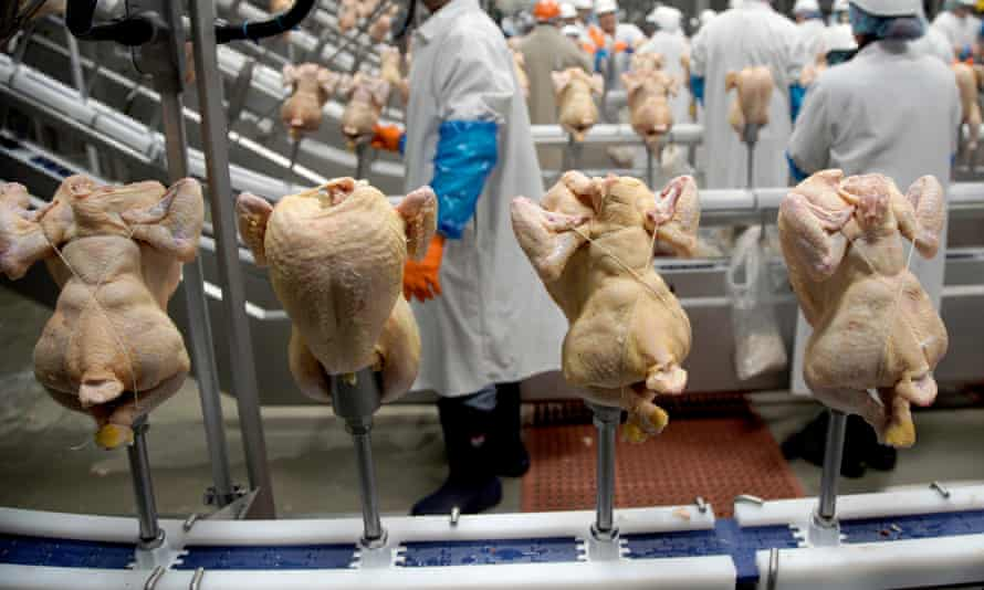 Workers and chicken carcasses at a processing plant in the United States.