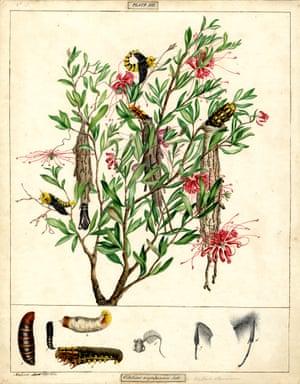 Saunders' case moth by Helena Scott