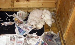 Sale of puppies under eight weeks old to be made illegal