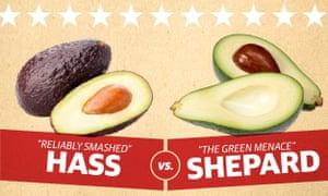 hass v shepard avocado