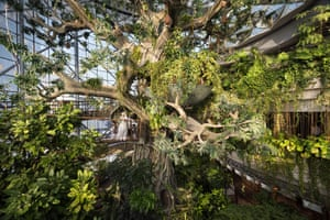 An indoor tropical rainforest, with a manmade tree and more than 3,000 species of plants, animals and free-flying birds.