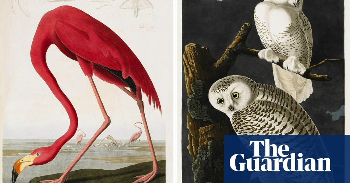 US conservation group to drop Audubon name over 'pain' caused by slaveholder