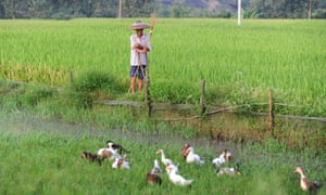 A farmer in Hunan province