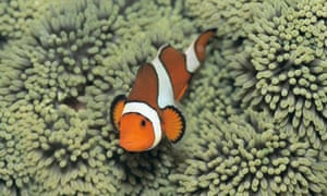 A clownfish is one of the many underwater creatures you'll see when snorkelling.