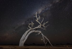 A gnarled tree in a starlit night at Pilungah Reserve