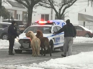 Police round up two ponies that escaped during the snow storm on Staten Island