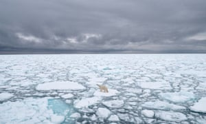 Unlike other species threatened by hunting or deforestation, polar bears can only be saved if their habitat is protected.