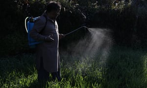 A farmer without a mask sprinkles pesticide on crops in India.