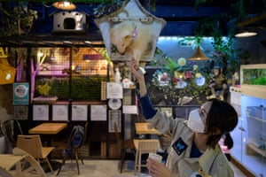 A member of staff feeds a raccoon at the Table A Raccoon cafe in Seoul.