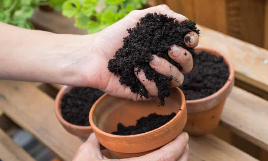 Clay pots and compost