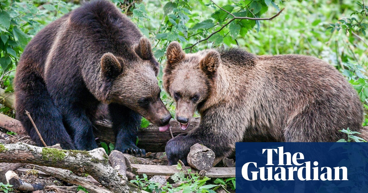 Bears and wolves to coexist in UK woods in conservation project