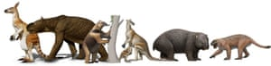 Mega-mammals from Pleistocene tropical Australia.