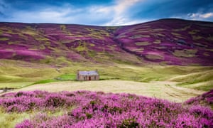 Purple haze: heather and a hiker's hut on Braemar Mountain.