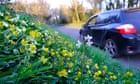 Wildflower meadows to line England's new roads in boost for biodiversity