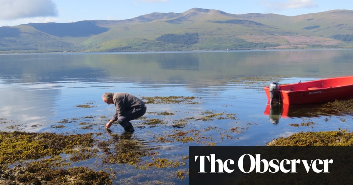The Sea Is Not Made of Water by Adam Nicolson review – of mollusc and men