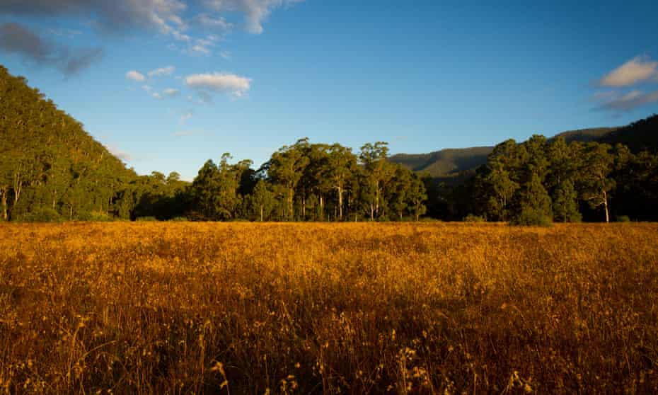 Journalist Anthony Sharwood describes the Australian Alps Walking Track as a 'botanical paradise'.