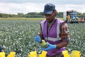 What are we learning here? That people can earn minimum wage for hours of picking broccoli – then still get the sack at the end of it?