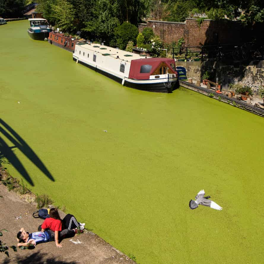 A young couple lay on the canal side as birds fly over the green coating on Regent's Canal, London, following a huge increase in the amount of duck weed on the waterway last summer
