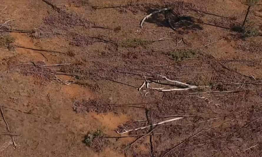 Land clearing in Queensland is an increasing danger to the environment and threatened species because the federal government is failing to enforce laws.