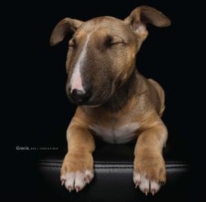 Gracie, a bull terrier mix