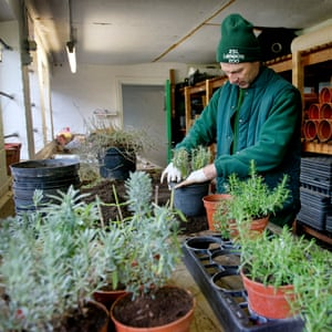 Ian Ament pots herbs in the potting shed and greenhouse