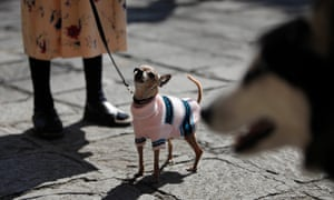 Tails within tales … dogs in Mexico City.
