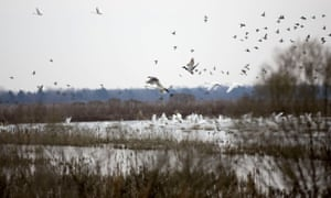 The land of Jett Ferebee, a land and farm owner in Creswell, North Carolina, where birds are among the few visible wildlife remaining on the land.