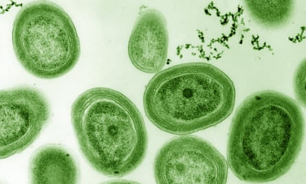 Magnified Prochlorococcus bacteria.