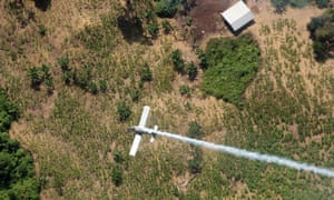 A police plane sprays herbicides over coca fields in Colombia in 2008. Colombia will resume using weed killer to destroy coca crops after suspending its use due to cancer concerns.